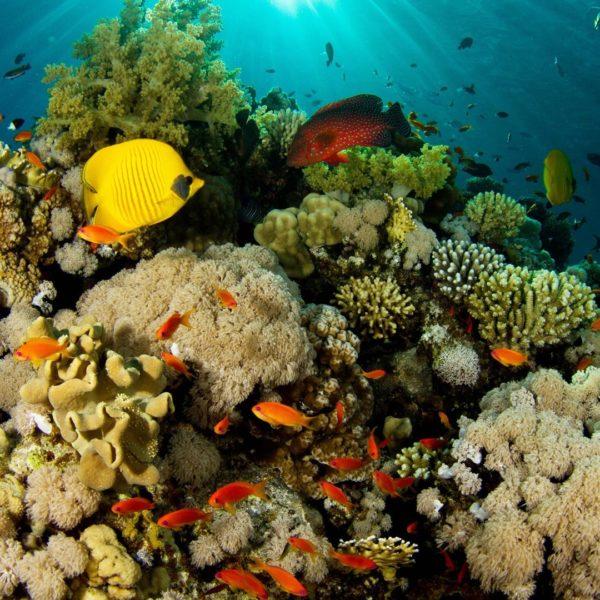 nature of sea